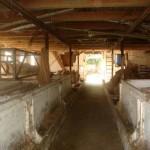 Svinehuset504